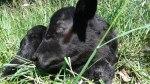 ottawa-grass-fed-beef_20160613_154513
