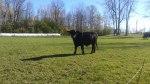 ottawa-grass-fed-beef_20161023_110034