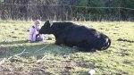 ottawa-grass-fed-beef_20161112_151032