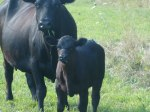 ottawa-grass-fed-beef_p1010735