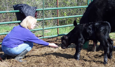 Sharron of Tradition Angus with one of the calves