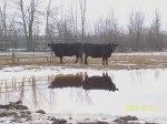 ottawa-local-beef_10