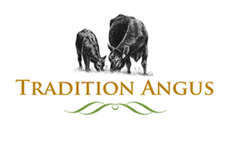 Tradition Angus